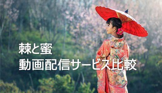 【韓国ドラマ】棘と蜜を見るならこの動画配信サービスを選ぼう