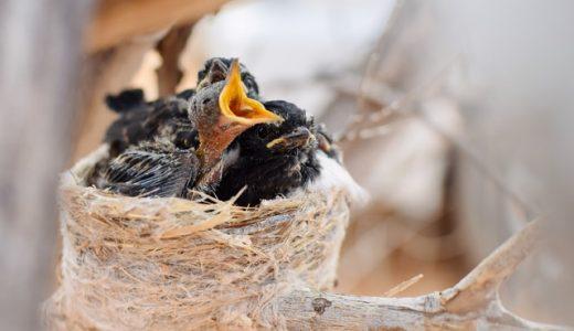 カッコーの巣の上でを見るならこの動画配信サービスを選ぼう